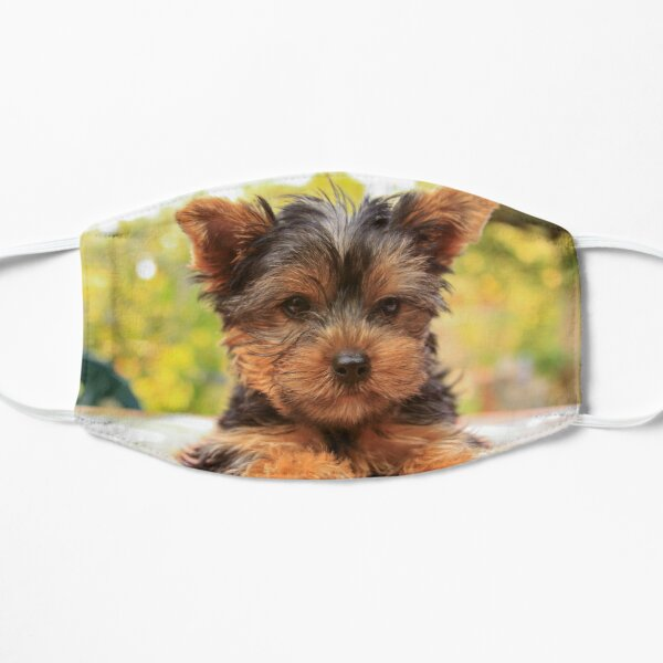 Cute Yorkshire terrier puppy portrait  Flat Mask