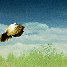 Freedom by zzsuzsa