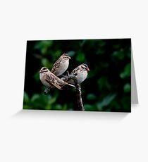 Whydah Meeting Greeting Card