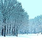 Frozen by kkphoto1