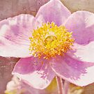 Japanese Anemone iphone case by Elaine Manley
