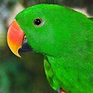 Eclectus Parrot  by Elaine Manley