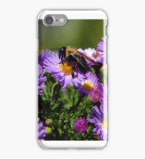 September Astors iphone case iPhone Case/Skin