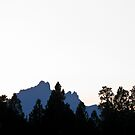 three fingered jack by Bruce  Dickson
