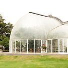 The palm house at Bicton House by Tim Topping
