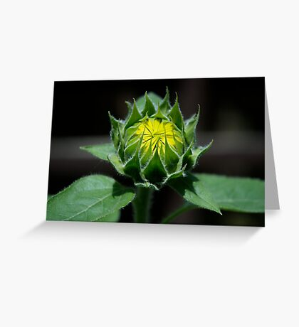 Sunflower - Almost Grown Greeting Card