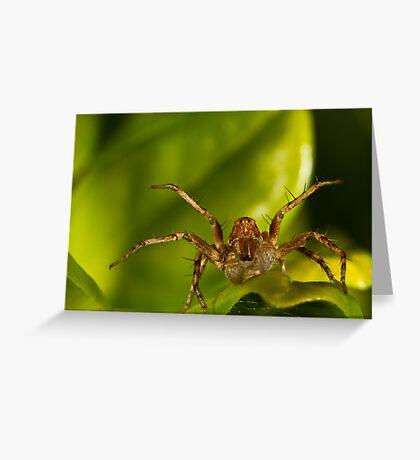 Lynx Spider Greeting Card