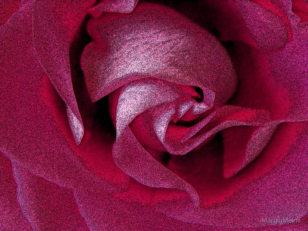 """An """"Inky"""" Rose by MaryinMaine"""