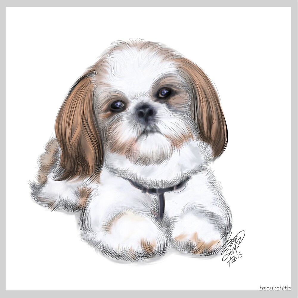Quot Illustration Of Shih Tzu By Basu Kshitiz Quot By Basukshitiz