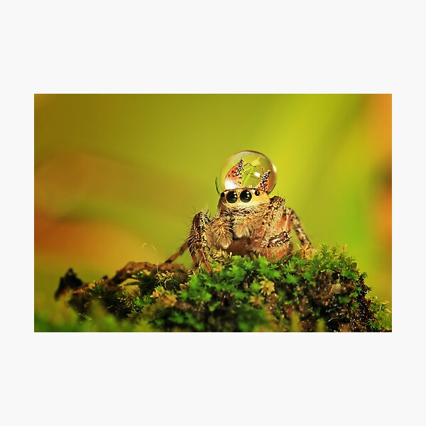 spider, dew and butterfly mating Photographic Print