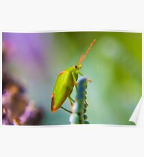 Green Stink Bug Poster