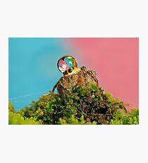 full colors Photographic Print