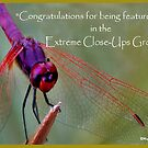 EXTREME CLOSE-UPS FEATURE BANNER by Magriet Meintjes