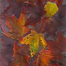 iPhone Case of painting...Autumn leaves...natures gift to me... by linmarie