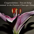 Extreme Closeup Banner by Eileen Brymer
