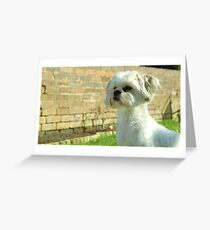 My Dog In Summer Greeting Card