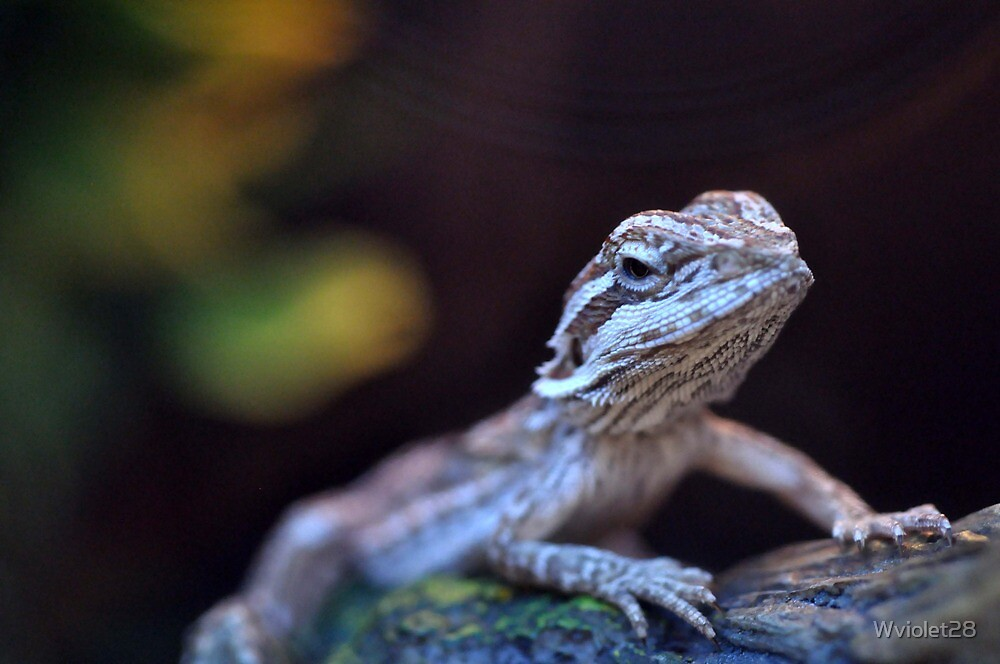 Bearded Dragon by Wviolet28