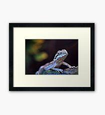 Bearded Dragon Framed Print