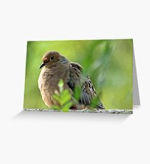 Mourning dove on fence Greeting Card