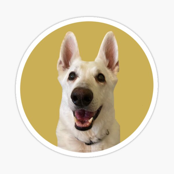 Jack the TikTok Dog (Yellow) Sticker