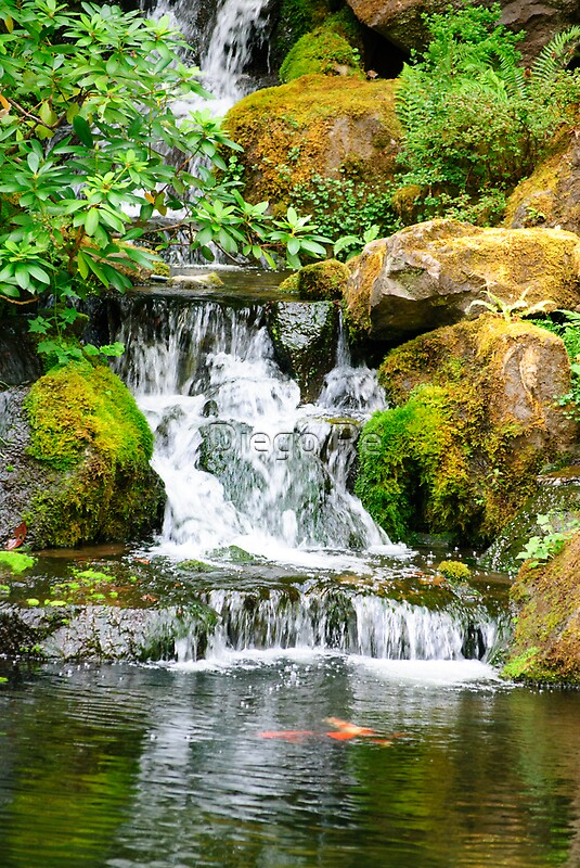 Coy pond waterfall by diego re redbubble for Coy ponds pictures