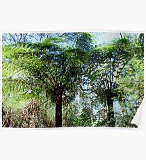 Dandenongs rain forest Poster