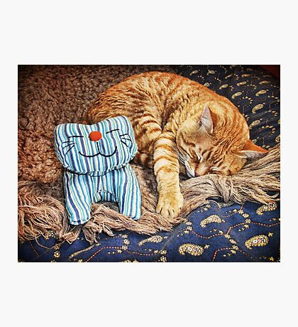 Cat Naps Photographic Print