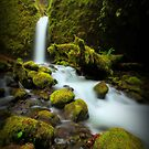 Mossy Grotto Falls I by Tula Top