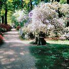 WHITE MIST  Isabella Plantation Richmond Surrey by Shoshonan