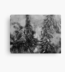 Barbary Macaque and Infant Canvas Print