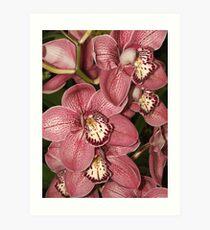 Orchids (8147) Art Print
