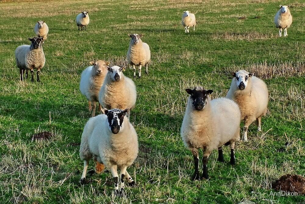 We're Watching Ewe!! by AnnDixon