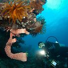 Diver inspecting sea sponge by Stephen Colquitt