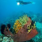 Diver and feather stars by Stephen Colquitt