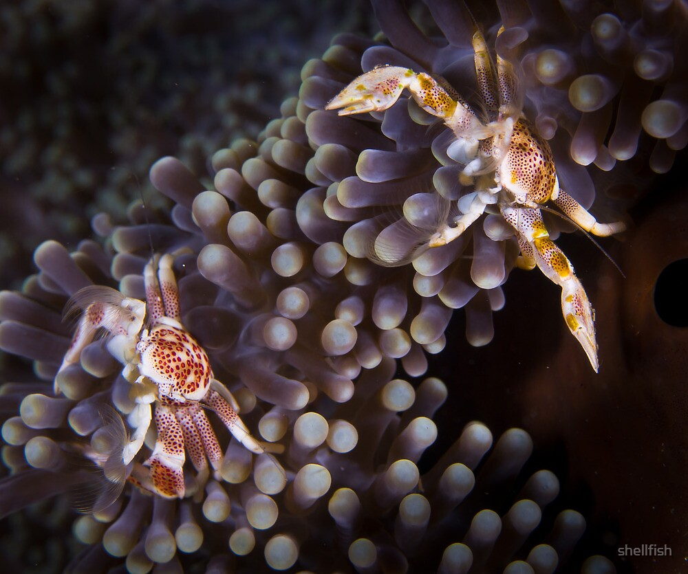 Getting crabby....... by shellfish