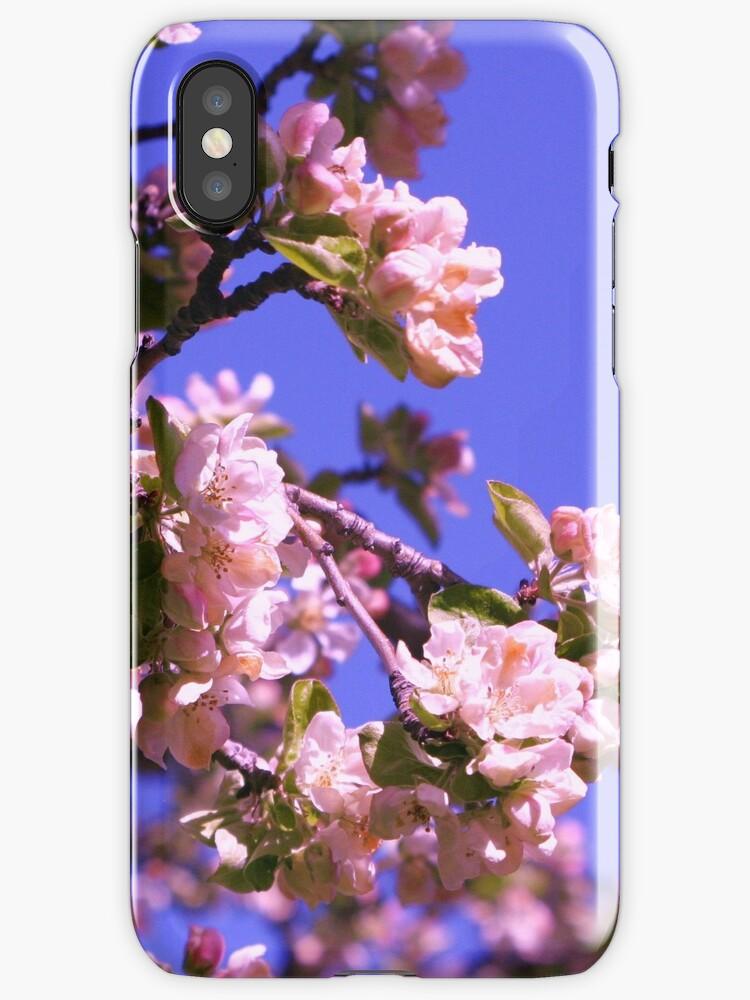 Cherry Blossoms by ekerkmann