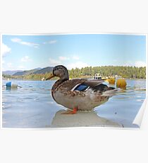 Duck!  Lake Placid New York Poster