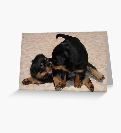 Rottweiler Puppies Playing Greeting Card
