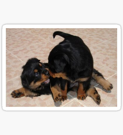 Rottweiler Puppies Playing Sticker