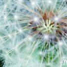 Burst by milkayphoto