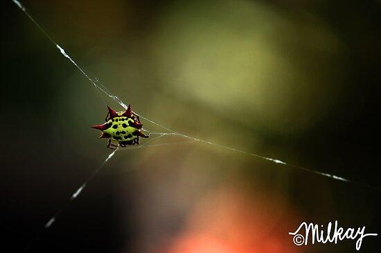 Dream Weaver by milkayphoto