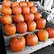 Halloween (Selective Colour)