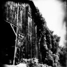 ivy laced tobacco barn by ShellyKay