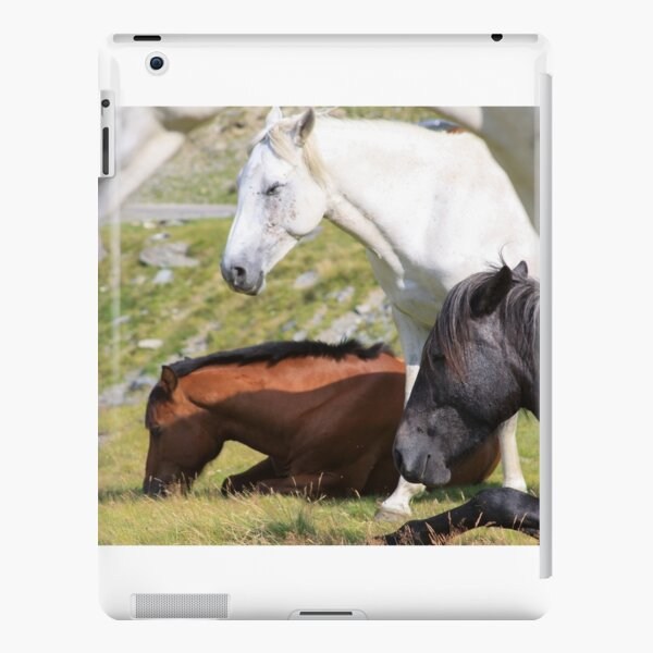 4 gentle horses sitting quiet in the mountains iPad Snap Case