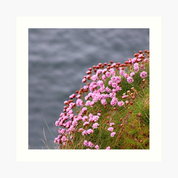 Pink flowers on edge of the sea coast Art Print
