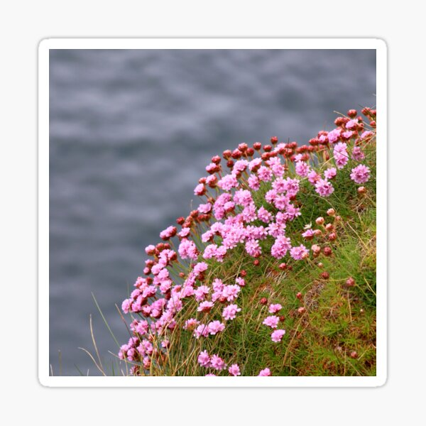 Pink flowers on edge of the sea coast Sticker