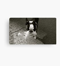 Terrier Water Canvas Print
