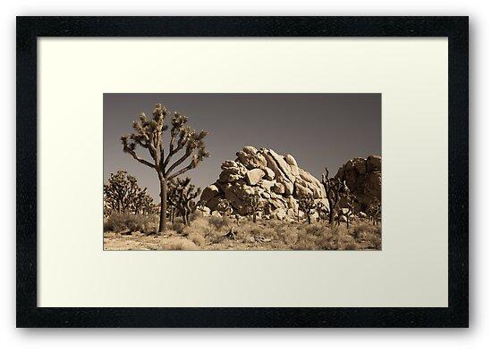Dramatic Mojave Desert Panorama by Nickolay Stanev