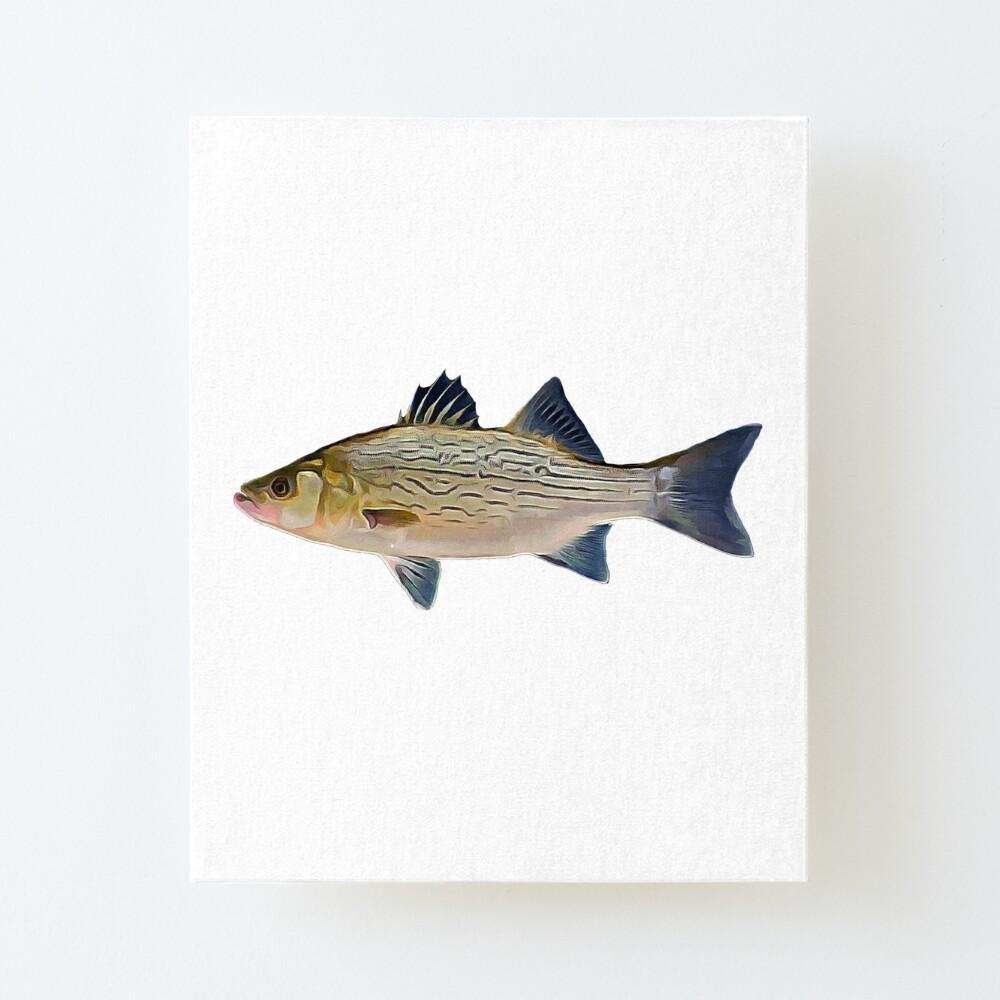 Hybrid Striped Bass Fishing Art Board Print By Noah357 Redbubble