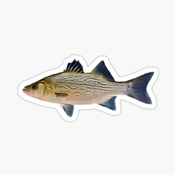 Hybrid Striped bass fishing  Sticker